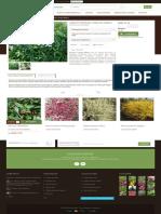 Arbust Deutzia crenata Nikko - GardenExpert.ro.pdf