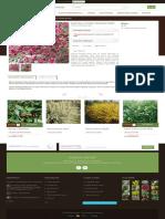 Matura Cytisus 'Boskoop Ruby' - GardenExpert.ro.pdf