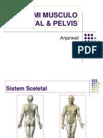 5.MUSCULO SCELETAL & PELVIS.ppt