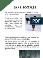 2PP-SISTEMAS SOCIALES.pdf