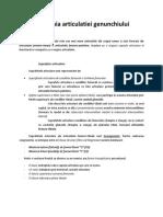 Anatomia Articulatiei Genunchiului