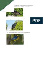 Especies de Aves
