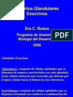 CLASES DE ADENÓMEROS