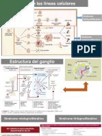 expo Dg por laboratorio.pptx