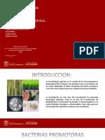 MICROBIOLOGIA AGRICOLA.pptx