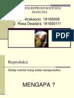 SISTEM_REPRODUKSI_PADA_MANUSIA_-_Power_P.pptx