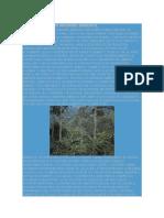 160134234-Codigo-Etico-de-Un-Ingeniero-Ambiental.docx