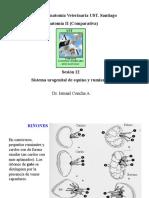 012-2011 AV2-Urogenital Eq y Rum.pdf