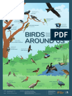 1. Common Birds
