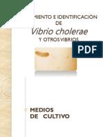 Aislamiento e Identificacion de Vibrio cholerae