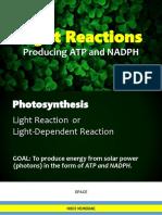 Grade 11 Light Reactions 2019.pdf