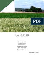 Impactos socioambientais de sistemas agroenergeticos.pdf