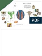 MAPA de ideas.pdf