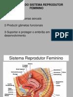 2-FEMININO ANATOMIA E FISIOLOGIA.pptx