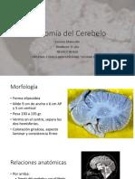 Anatomía del Cerebelo .pptx