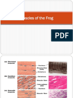 Muscles-of-the-Frog.pptx