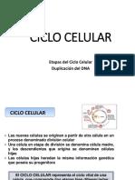 2k-3- Ciclo celular_16-10-19.pdf
