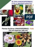 Diversidade das Angiospermas
