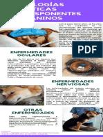 Patologias geneticas predisponenetes en caninos.pdf