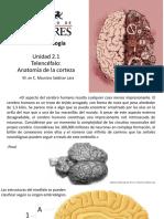 Unidad 2.1 Telencéfalo Corteza.pdf