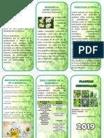 Planta Medicinal - Triptico