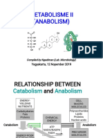Kul-Metabolisme-II