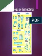 Morfología de las bacterias.pptx
