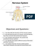 2 Human Body Nervous System