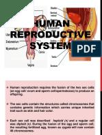 Male-reproductive-organ.pptx