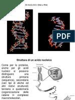 DNA-RNA (1).pdf