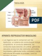 Anatomía y Fisiología Masculina-1