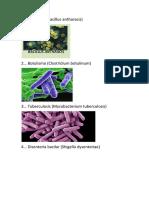 1bacterias.docx