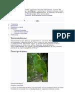 Psittacoidea.docx