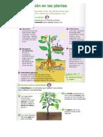 Resumen-NutricionPlantas.docx