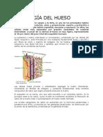 Fisiología Del Hueso