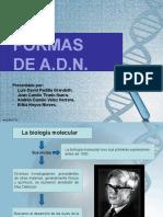 ADN [Autoguardado].pptx