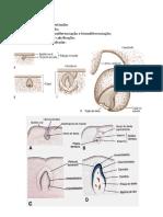 RESUMO HISTOLOGIA - dentinogenese.docx