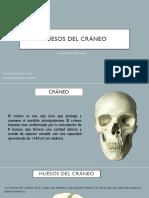 Huesos del cráneo Islas-Guzmán.pptx