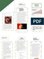 folleto psicobiologia.docx