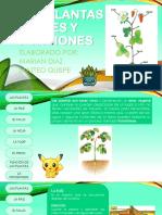 Las Plantas, Partes y Funciones