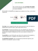 LOS 5 SENTIDOS.docx