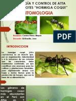 BIOLOGÍA Y CONTROL DE ATTA CEPHALOTES.pptx