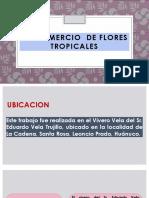 BIOCOMERCIO DE FLORES TROPICALES.pptx