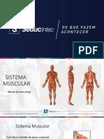 1 - Anatomia Masso 3 Muscular.pdf