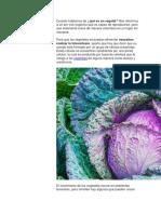 vegetales.docx