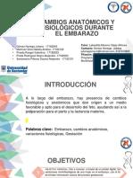 Cambios Anatómicos y Fisiológicos Proyecto de Asignación, Finales