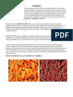 FLUJOGRAMA PARA EL AJI.docx