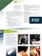 PT_FeLV_Leucemia_felina.pdf
