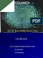 Curso bioquimica UVM