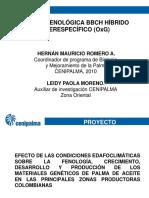 BBCH EN HIBRIDO DE PALMA.ppt